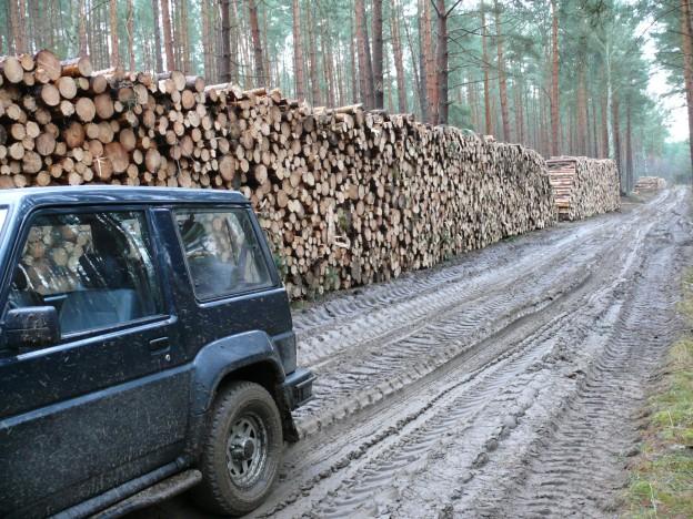 praca leśnika to nie tylko produkcja drewna